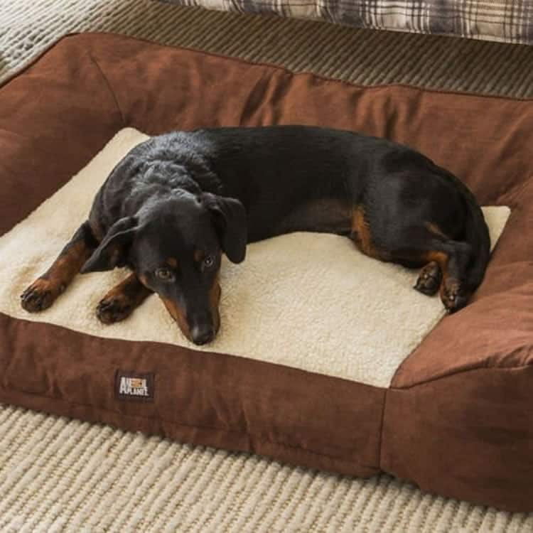nimal Planet Orthopedic Memory foam dog bed