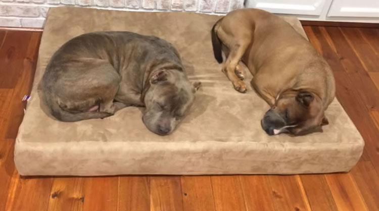 Big Barker Orthopedic Flat Dog Bed