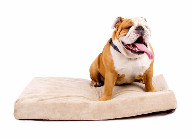 Brindle 4 Inch Dog Bed