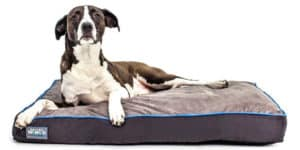 "First-Quality 6"" Thick Orthopedic Dog Bed Review"