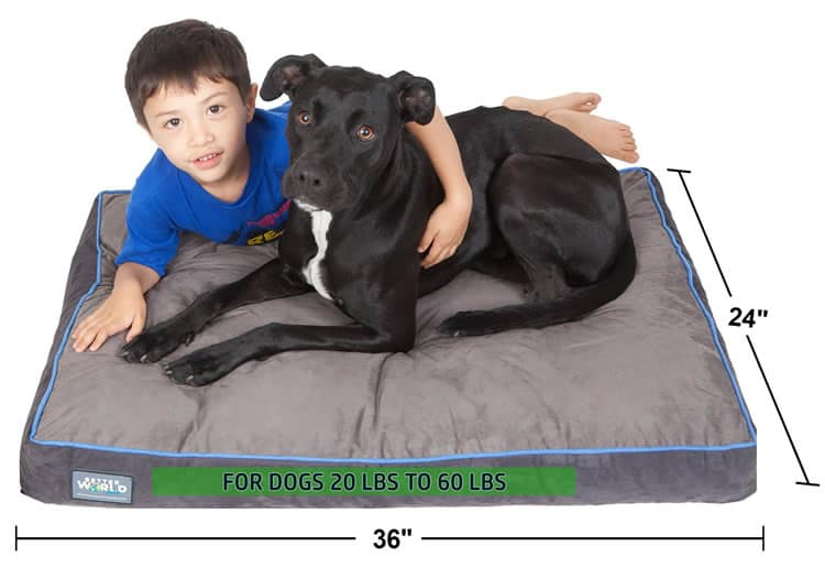 First Quality Dog Bed