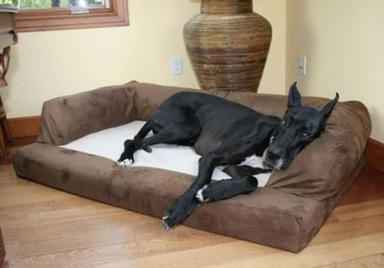 XXL Dog Bed Orthopedic Foam