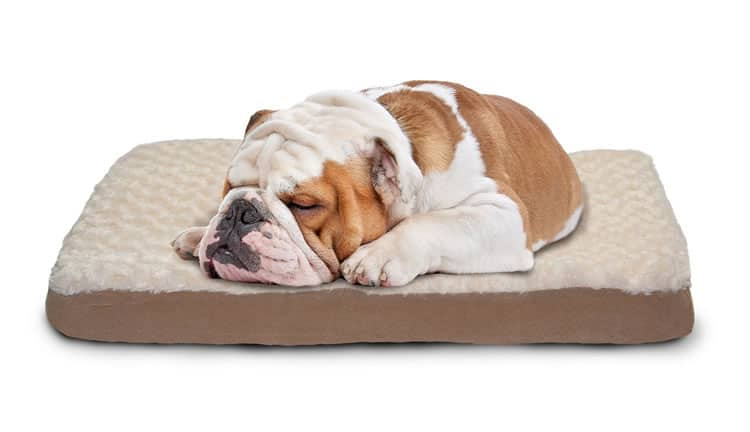 furhaven-dog-bed
