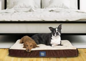 Serta Orthopedic Pillowtop Dog Bed Review