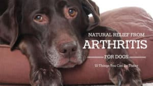 Natural Arthritis Relief for Dogs