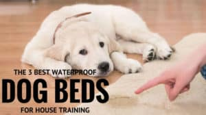 The Three Best Waterproof Orthopedic Dog Beds for House Training