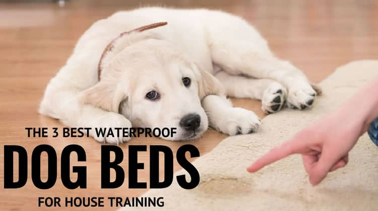The Three Best Waterproof Orthopedic Dog Beds For House
