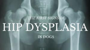 First Signs of Hip Dysplasia in Dogs