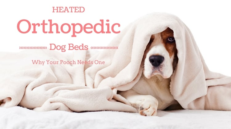 Heated Orthopedic Dog Beds- Why Your Pooch Needs One